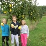 ekološko voće dunja 2013.